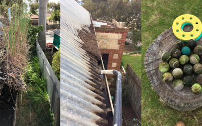 What Can Be Found In Gutters?