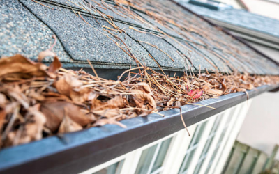 How Neglecting Your Gutters Can Harm Your Home